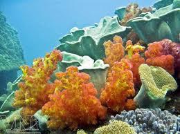 Cù Lao Chàm - lặn ngắm san hô